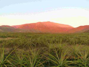 Flora de la Zona Reservada Lomas de Ancón, tillandias y el desierto