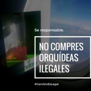 Gervitro - conservación- plantas - invitro - adornos - regalos - arequipa- turismo - sostenibilidad - 4